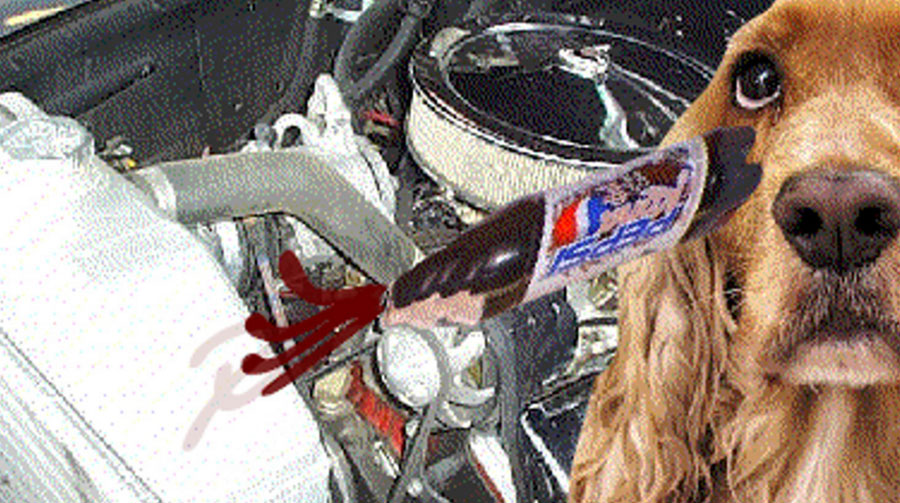 A dog poured Pepsi in my crankcase.